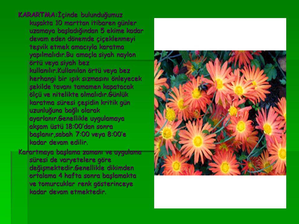 KARARTMA:İçinde bulunduğumuz kuşakta 10 marttan itibaren günler uzamaya başladığından 5 ekime kadar devam eden dönemde çiçeklenmeyi teşvik etmek amacı
