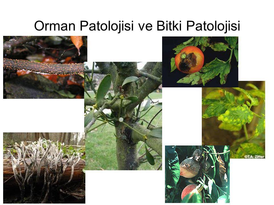Bitkiler dünyası bilimsel olarak yedi bölümde toplanmaktadır Bacteriophyta: Bakteriler Cyanophyta: Mavi yeşil su yosunları Phycophyta: Algler, Esmer ve Kızıl su yosunları, Flagellatae ve Diatomeae'ler Mycophyta: Mantarlar Ek grup (Lichenes) : Mantarlarla Alglerin ortak yaşamından oluşan bitki grubu Bryophyta: Kara yosunları Pteridophyta: Eğreltiler Spermatophyta: Tohumlu bitkiler Gymnospermae : Açık Tohumlular Angiospermae: Kapalı Tohumlular Dicotyledoneae (Magnoliatae): Çift çenekli bitkiler Monocotyledoneae (Liliatae) : Tek çenekli bitkiler Bunlardan ilk dört bölüm Thallophyta kütüğüne, son üç bölüm ise Cormophyta kütüğüne bağlıdır.