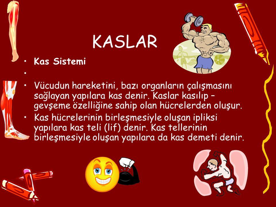 KASLAR Kas Sistemi Vücudun hareketini, bazı organların çalışmasını sağlayan yapılara kas denir.