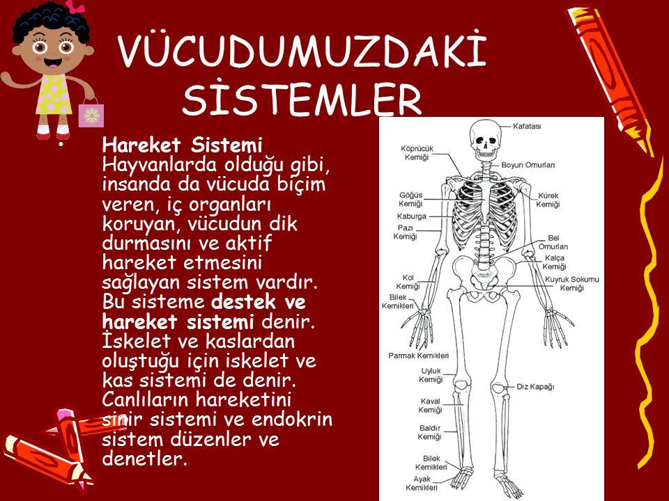 VÜCUDUMUZDAKİ SİSTEMLER Hareket Sistemi Hayvanlarda olduğu gibi, insanda da vücuda biçim veren, iç organları koruyan, vücudun dik durmasını ve aktif h