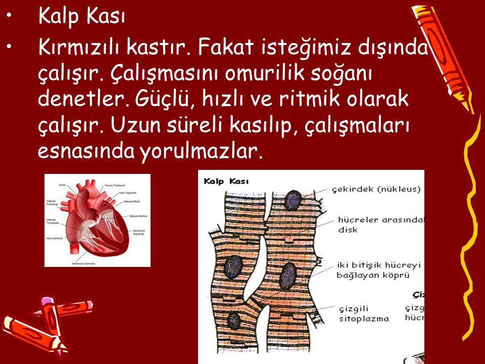 Kalp Kası Kırmızılı kastır. Fakat isteğimiz dışında çalışır. Çalışmasını omurilik soğanı denetler. Güçlü, hızlı ve ritmik olarak çalışır. Uzun süreli