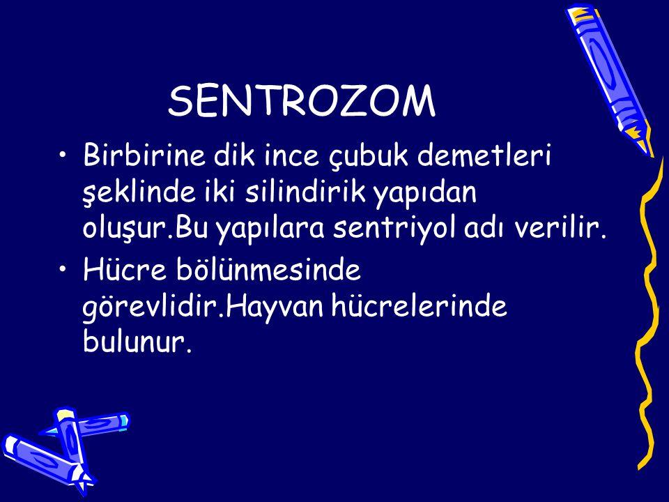 SENTROZOM Birbirine dik ince çubuk demetleri şeklinde iki silindirik yapıdan oluşur.Bu yapılara sentriyol adı verilir. Hücre bölünmesinde görevlidir.H