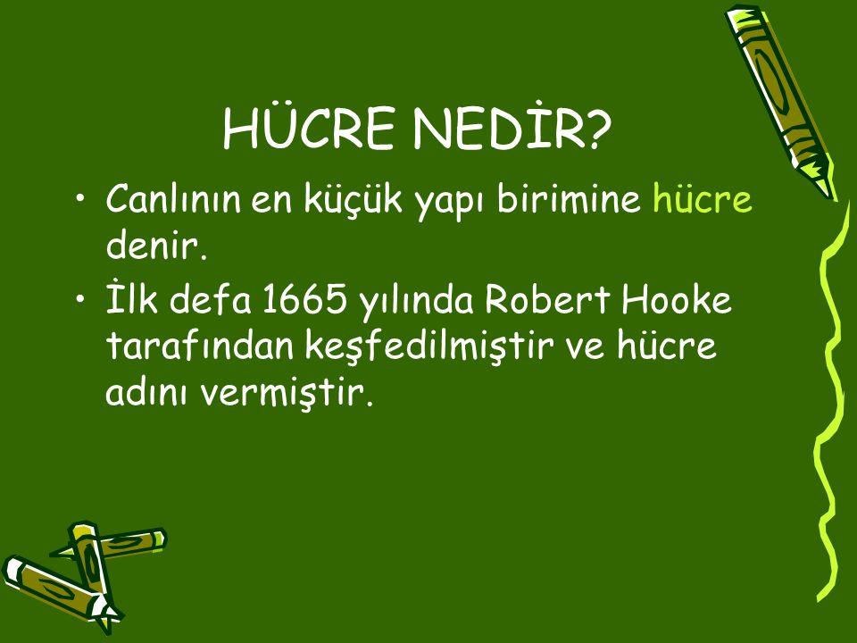 HÜCRE NEDİR? Canlının en küçük yapı birimine hücre denir. İlk defa 1665 yılında Robert Hooke tarafından keşfedilmiştir ve hücre adını vermiştir.