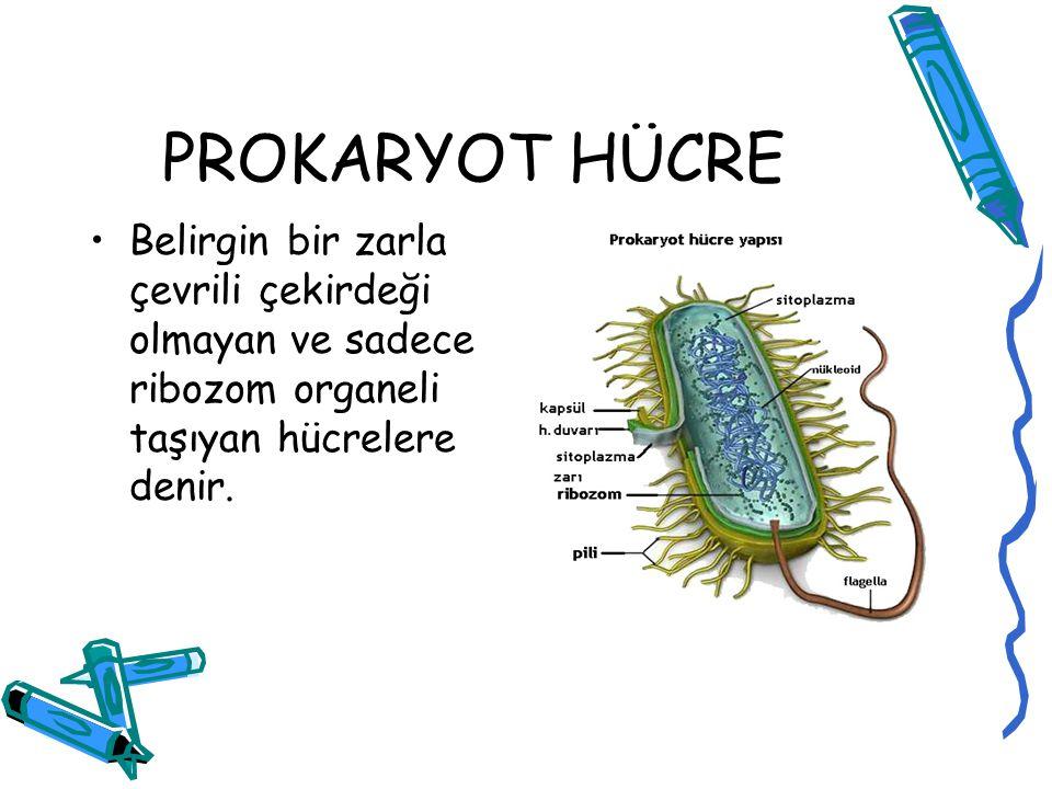 PROKARYOT HÜCRE Belirgin bir zarla çevrili çekirdeği olmayan ve sadece ribozom organeli taşıyan hücrelere denir.