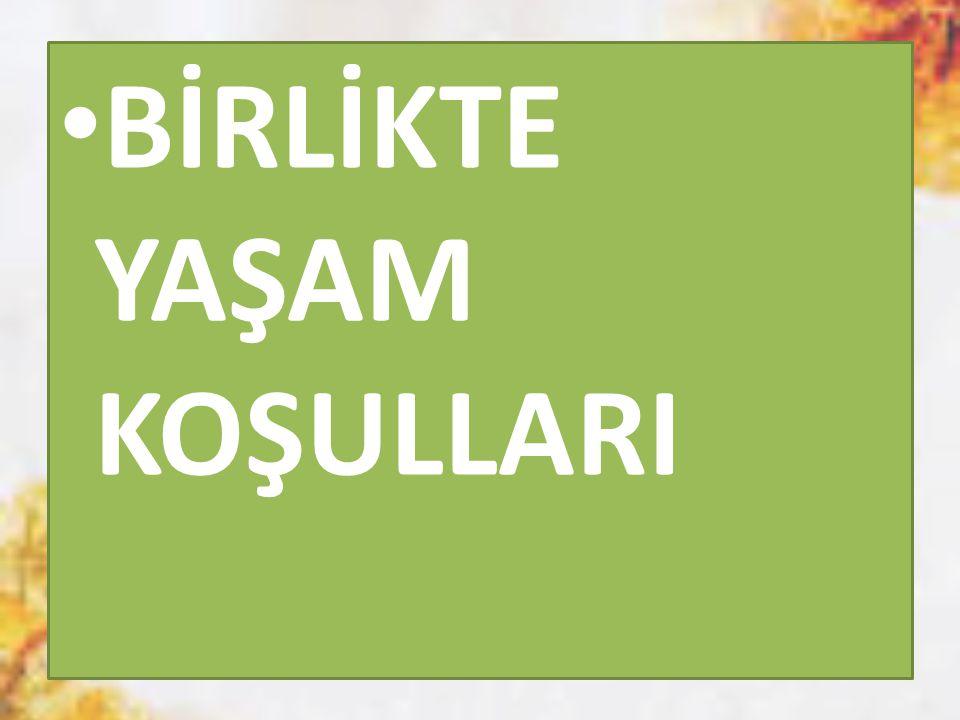 Milli Şairimiz Mehmet Akif ERSOY : Girmeden bir millete tefrika, düşman giremez, Toplu vurdukça gönüller, onu top sindiremez.