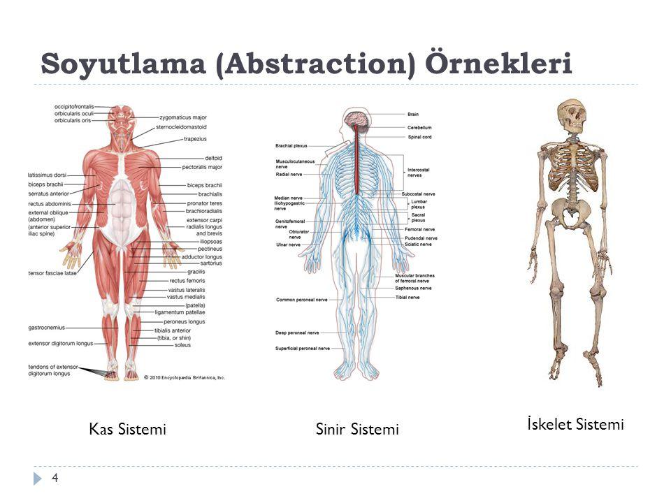 Soyutlama (Abstraction) Örnekleri 4 Kas SistemiSinir Sistemi İ skelet Sistemi