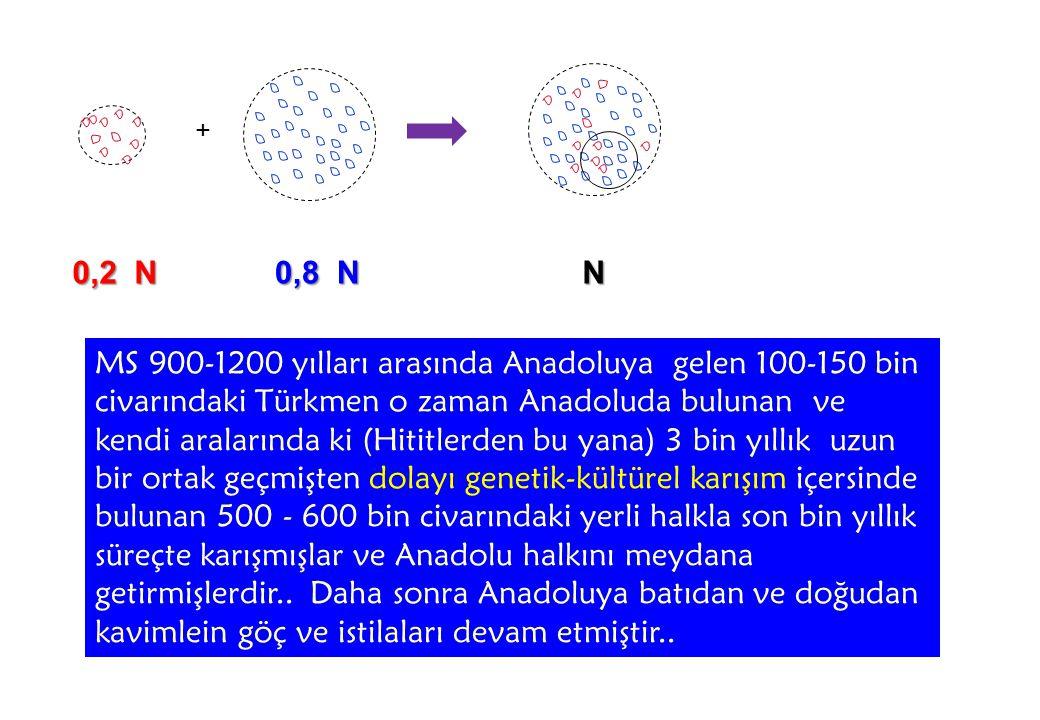 + 0,2 N 0,8 N N MS 900-1200 yılları arasında Anadoluya gelen 100-150 bin civarındaki Türkmen o zaman Anadoluda bulunan ve kendi aralarında ki (Hititlerden bu yana) 3 bin yıllık uzun bir ortak geçmişten dolayı genetik-kültürel karışım içersinde bulunan 500 - 600 bin civarındaki yerli halkla son bin yıllık süreçte karışmışlar ve Anadolu halkını meydana getirmişlerdir..