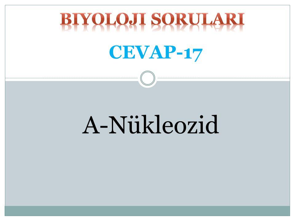 Pürin veya pirimidin bazı ile pentozdan meydana gelen birlikteliğe ne isim verilir? A-Nükleozid B-Nükleotid C-Nükleik asit D-Nükleoprotein E-Kromatin