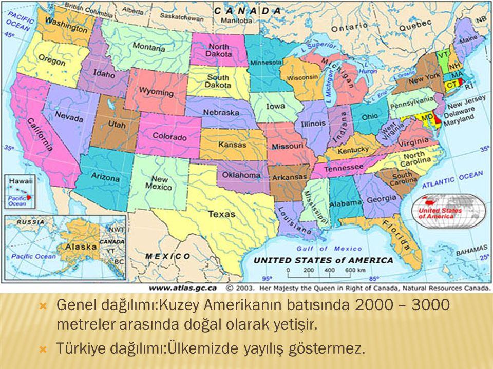  Genel dağılımı:Kuzey Amerikanın batısında 2000 – 3000 metreler arasında doğal olarak yetişir.  Türkiye dağılımı:Ülkemizde yayılış göstermez.