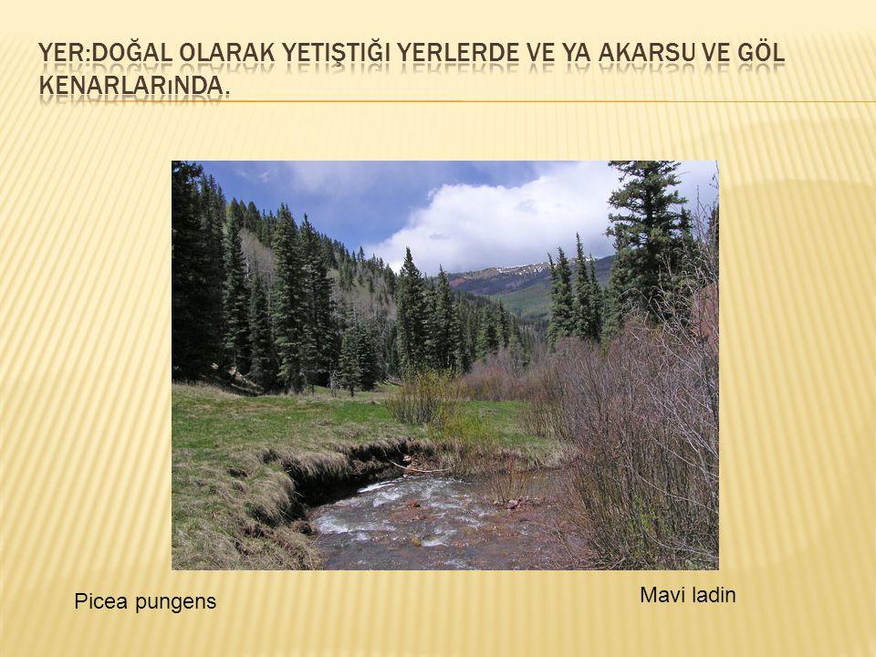  Toprak:Toprak isteği fazla değildir.Kuru ve fakir topraklarda da yetişebilir.