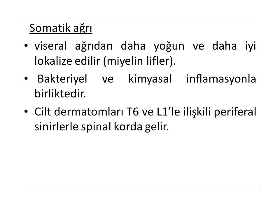 Somatik ağrı viseral ağrıdan daha yoğun ve daha iyi lokalize edilir (miyelin lifler).