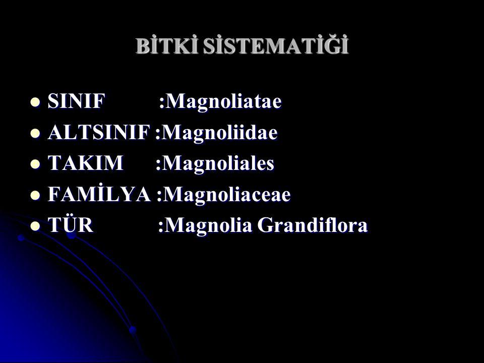 BİTKİ SİSTEMATİĞİ SINIF :Magnoliatae SINIF :Magnoliatae ALTSINIF :Magnoliidae ALTSINIF :Magnoliidae TAKIM :Magnoliales TAKIM :Magnoliales FAMİLYA :Mag