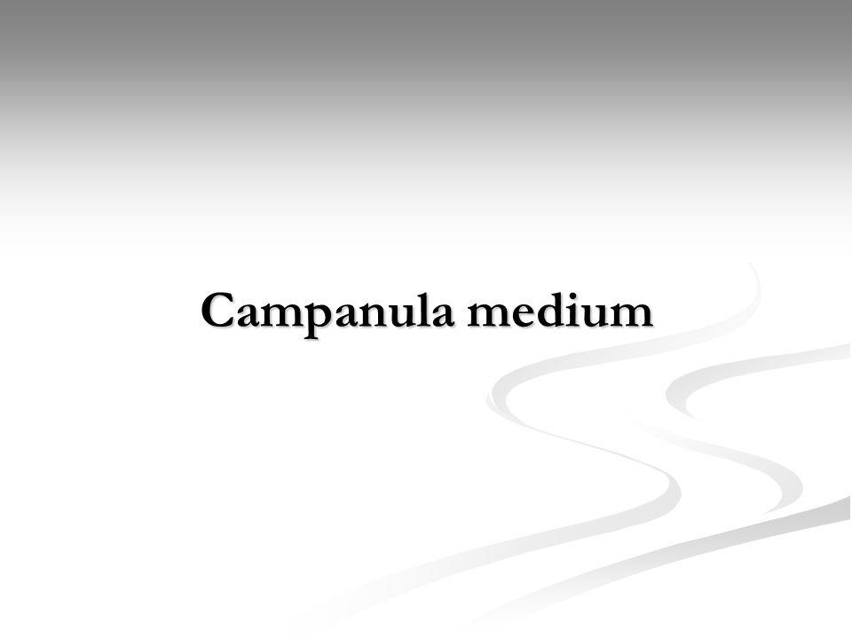 Bitkiler Alemi (Plantea) Alt Alem : Trachebionta Üst Şube : Spermatophyta Şube : Magnoliophyta Sınıf : Magnoliopsida Alt sınıf : Asteridae Takım : Campanulales Familya : Campanulaceae Botanik Adı : Campanula m m m medium