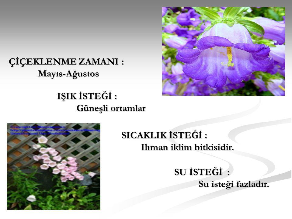 ÇİÇEKLENME ZAMANI : Mayıs-Ağustos IŞIK İSTEĞİ : Güneşli ortamlar SICAKLIK İSTEĞİ : Ilıman iklim bitkisidir.