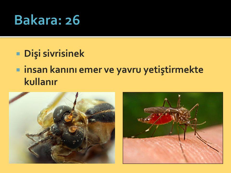  Dişi sivrisinek  insan kanını emer ve yavru yetiştirmekte kullanır