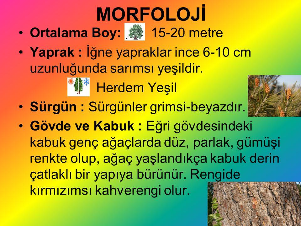 MORFOLOJİ Ortalama Boy: 15-20 metre Yaprak : İğne yapraklar ince 6-10 cm uzunluğunda sarımsı yeşildir. Herdem Yeşil Sürgün : Sürgünler grimsi-beyazdır