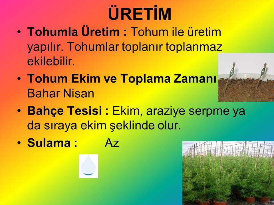 ÜRETİM Tohumla Üretim : Tohum ile üretim yapılır. Tohumlar toplanır toplanmaz ekilebilir. Tohum Ekim ve Toplama Zamanı : Bahar Nisan Bahçe Tesisi : Ek