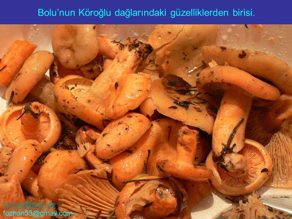 Bolu'nun Köroğlu dağlarındaki güzelliklerden birisi. fozhan@gmx.de fozhan53@gmail.com