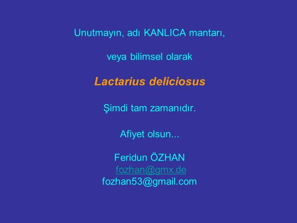Unutmayın, adı KANLICA mantarı, veya bilimsel olarak Lactarius deliciosus Şimdi tam zamanıdır. Afiyet olsun... Feridun ÖZHAN fozhan@gmx.de fozhan53@gm