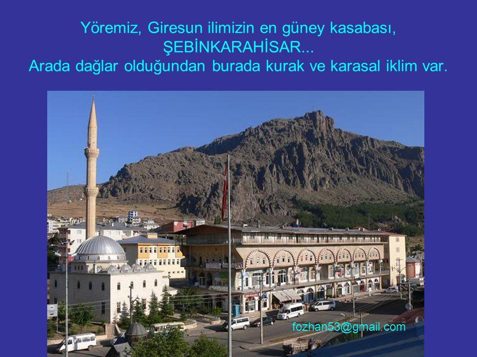 Yöremiz, Giresun ilimizin en güney kasabası, ŞEBİNKARAHİSAR... Arada dağlar olduğundan burada kurak ve karasal iklim var. fozhan53@gmail.com