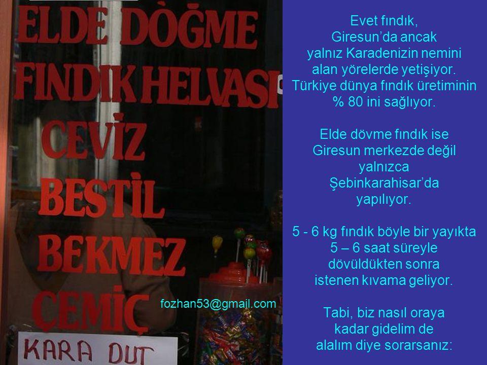 Evet fındık, Giresun'da ancak yalnız Karadenizin nemini alan yörelerde yetişiyor. Türkiye dünya fındık üretiminin % 80 ini sağlıyor. Elde dövme fındık