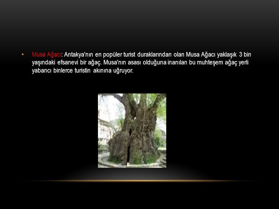 Musa Ağacı: Antakya'nın en popüler turist duraklarından olan Musa Ağacı yaklaşık 3 bin yaşındaki efsanevi bir ağaç. Musa'nın asası olduğuna inanılan b