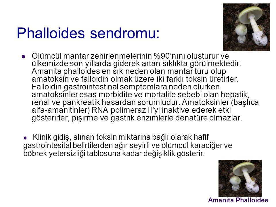 Phalloides sendromu: Ölümcül mantar zehirlenmelerinin %90'nını oluşturur ve ülkemizde son yıllarda giderek artan sıklıkta görülmektedir.