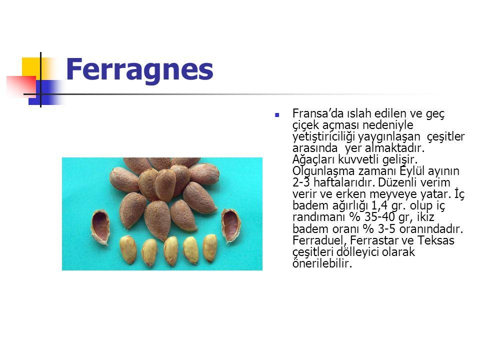 Ferragnes Fransa'da ıslah edilen ve geç çiçek açması nedeniyle yetiştiriciliği yaygınlaşan çeşitler arasında yer almaktadır.