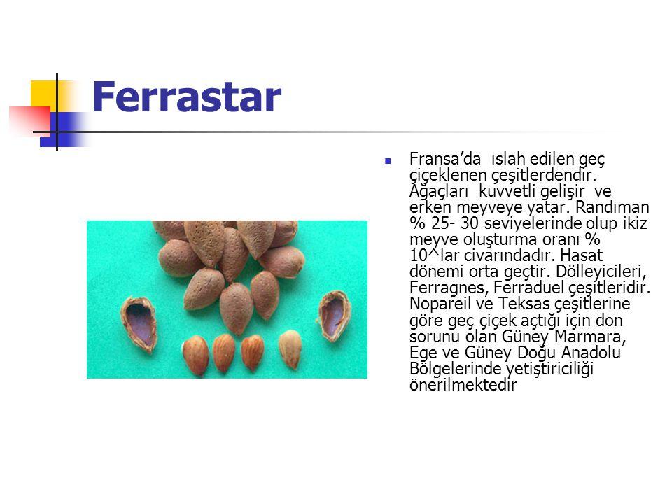 Ferrastar Fransa'da ıslah edilen geç çiçeklenen çeşitlerdendir.