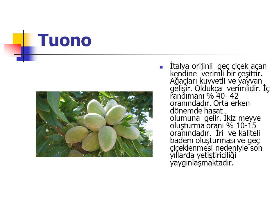Tuono İtalya orijinli geç çiçek açan kendine verimli bir çeşittir.