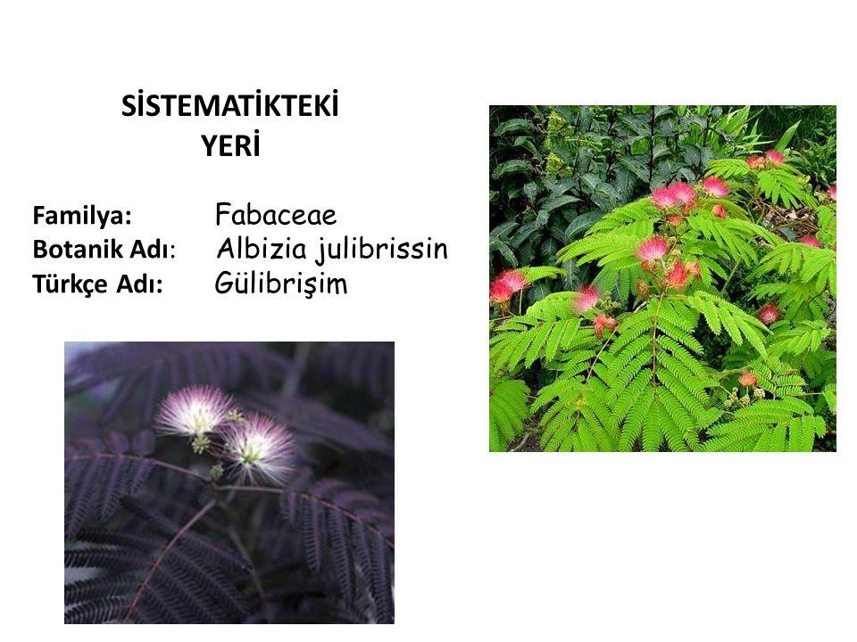 SİSTEMATİKTEKİ YERİ Familya: Fabaceae Botanik Adı: Albizia julibrissin Türkçe Adı: Gülibrişim