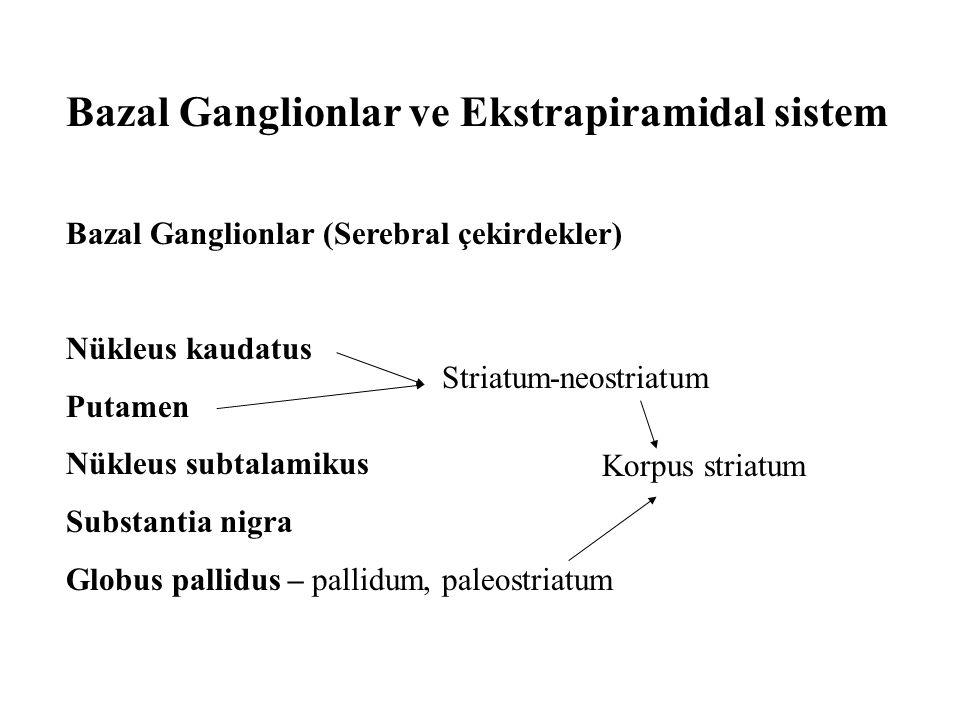 Bazal Ganglionlar ve Ekstrapiramidal sistem Bazal Ganglionlar (Serebral çekirdekler) Nükleus kaudatus Putamen Nükleus subtalamikus Substantia nigra Gl