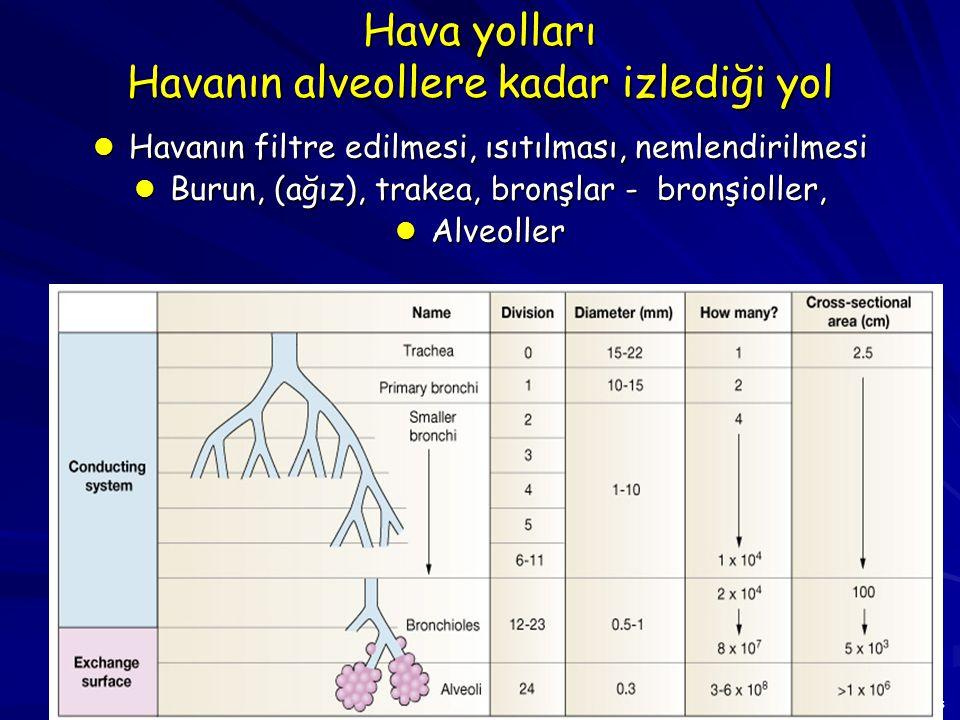 8 GAZ DEĞİŞİMİ Pulmoner alan Alveol Alveolar kanalları Respiratuvar bronşiyoller