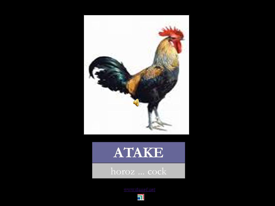 www.danef.net ÇET tavuk... chicken