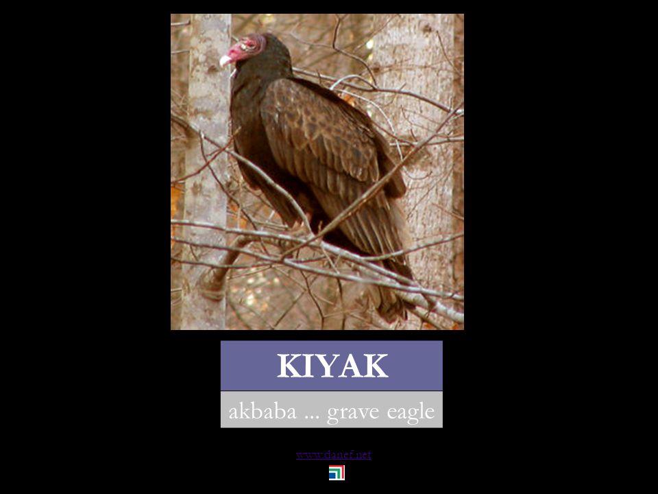 www.danef.net KAZ kaz... goose