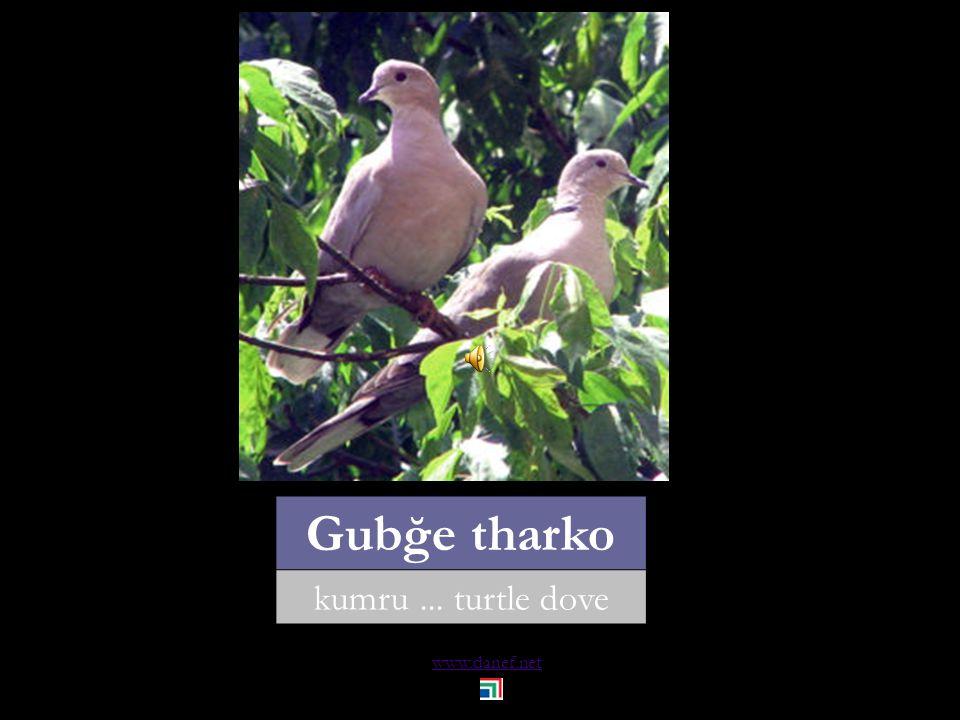 www.danef.net THAÇET hindi... turkey