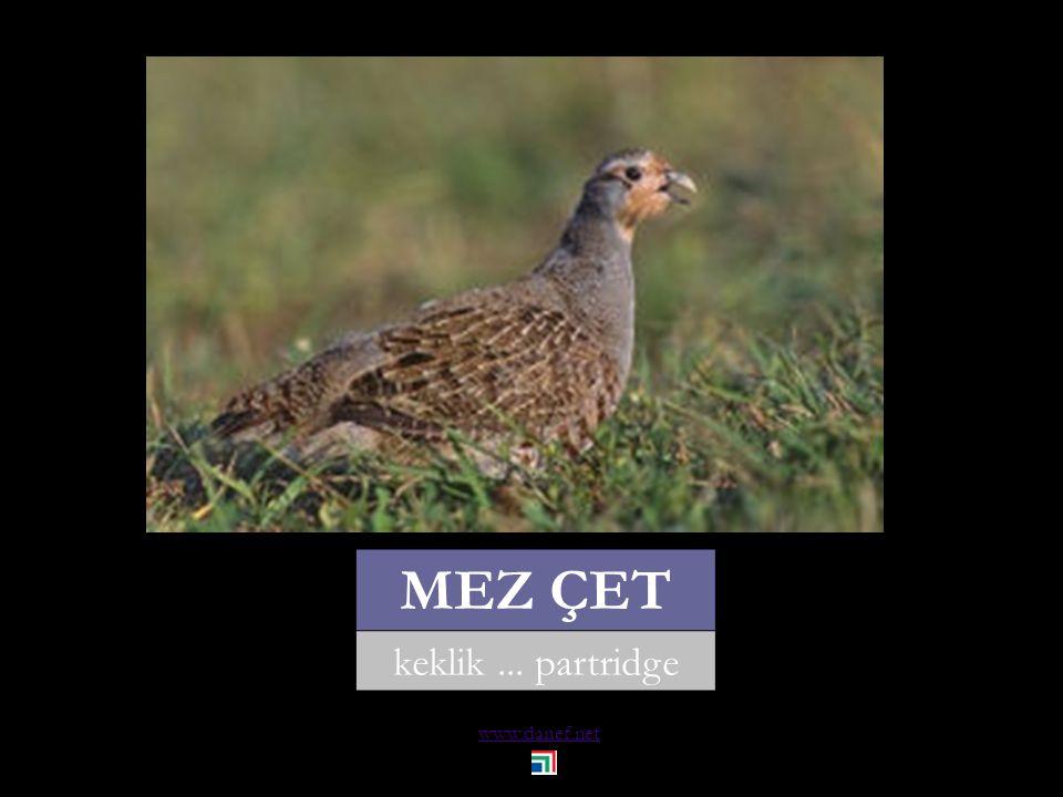 www.danef.net MEZ ATAK sülün... pheasant