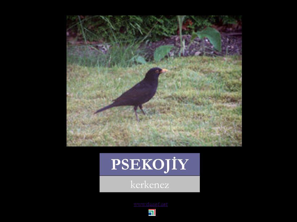 www.danef.net P Ḣ EW`U ağaç kakan... woodpecker