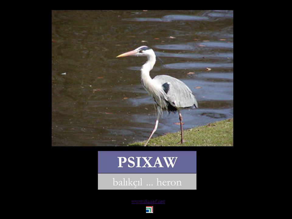www.danef.net HACBABE leylek... stork