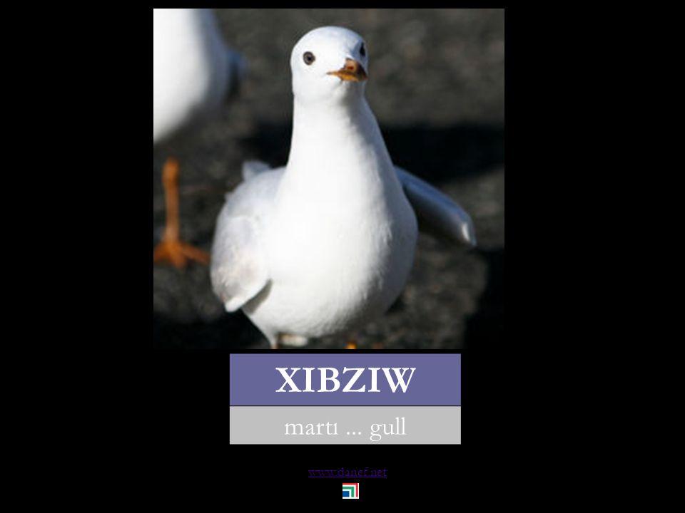 www.danef.net THARKO güvercin... pigeon