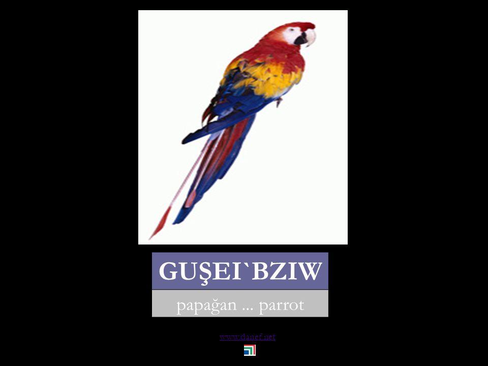 www.danef.net WOREDBZIW bülbül... nightingale
