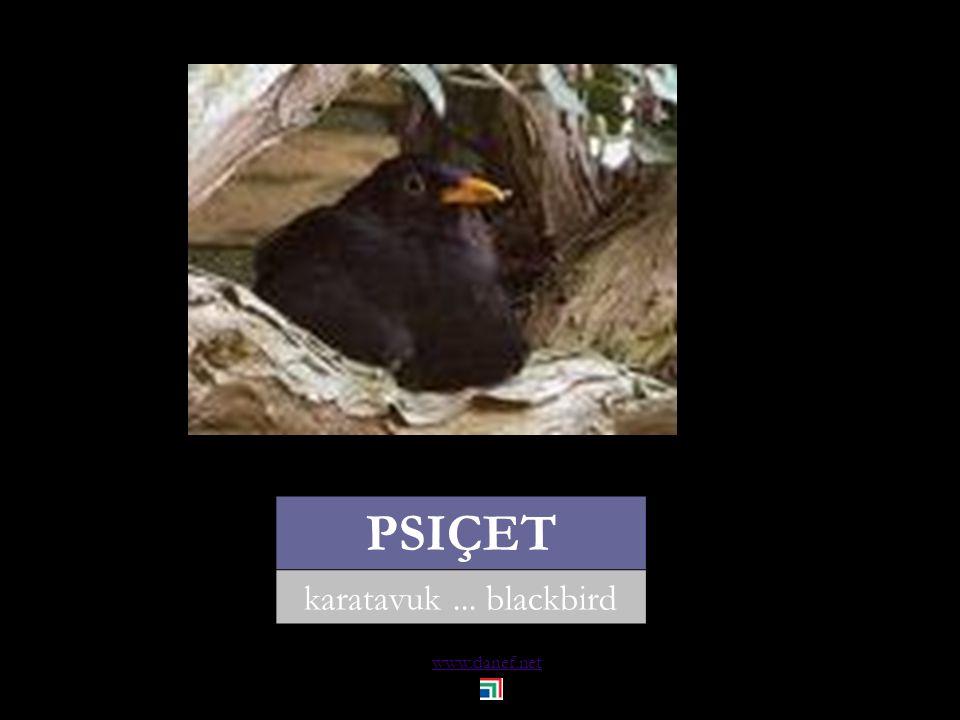 www.danef.net GUBĞE ÇET yaban tavuğu... wild hen