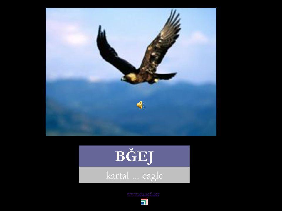 www.danef.net KIYAK akbaba... grave eagle