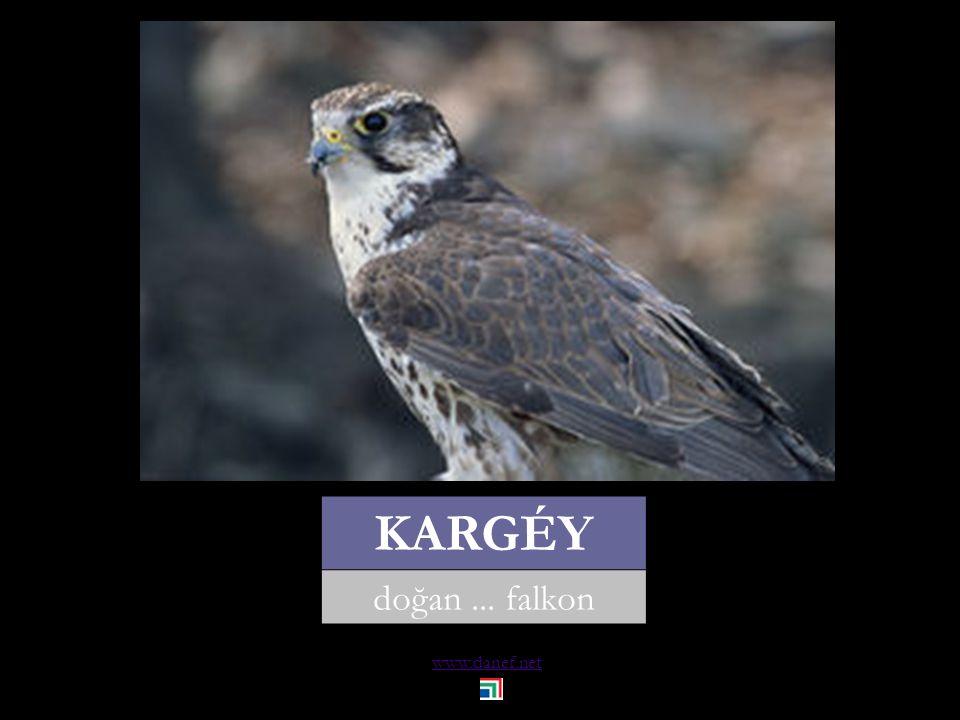 www.danef.net KANCI saksağan... magpie