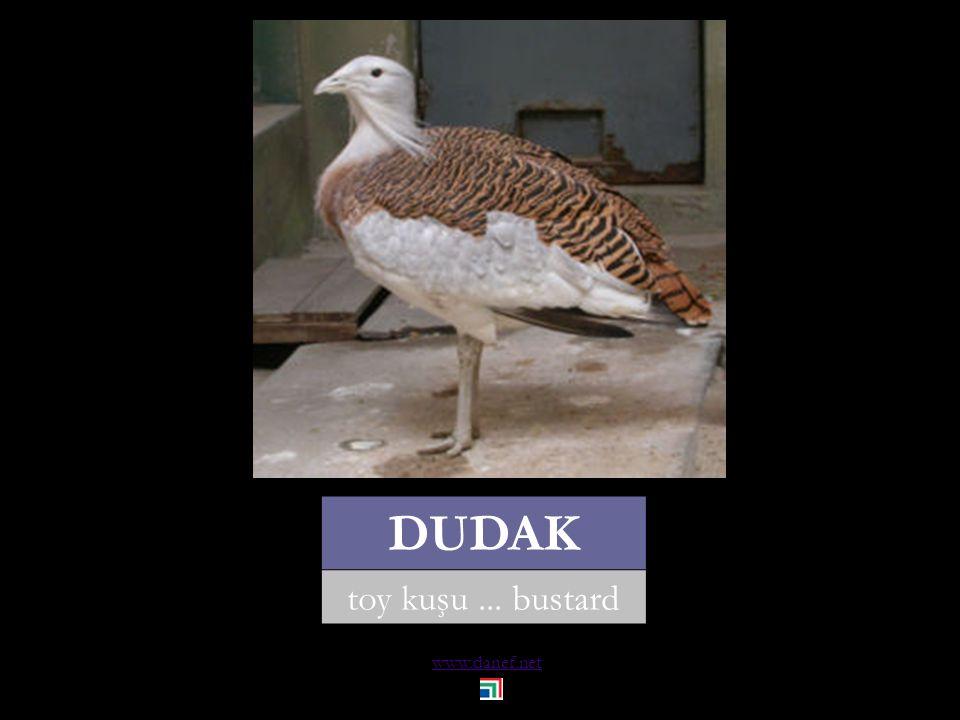 www.danef.net DUDAK toy kuşu... bustard