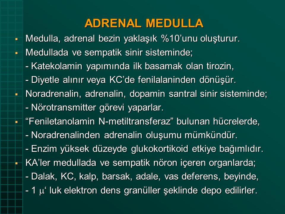 ADRENAL MEDULLA  Medulla, adrenal bezin yaklaşık %10'unu oluşturur.  Medullada ve sempatik sinir sisteminde; - Katekolamin yapımında ilk basamak ola