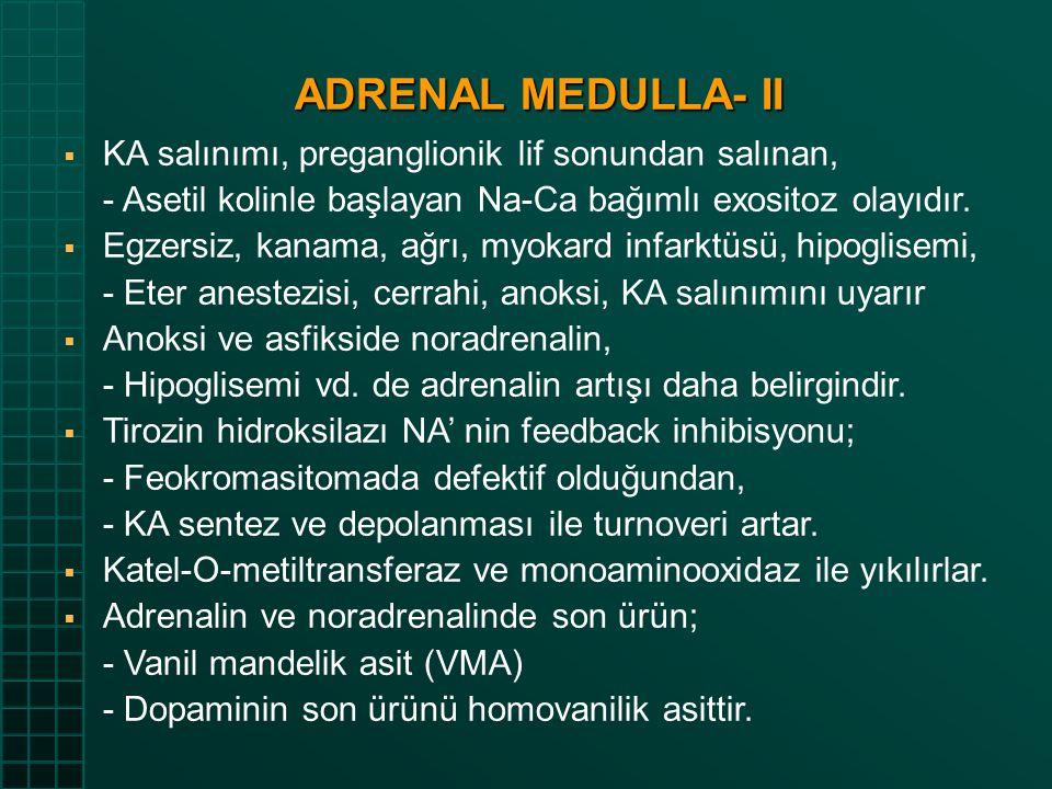 ADRENAL MEDULLA- II  KA salınımı, preganglionik lif sonundan salınan, - Asetil kolinle başlayan Na-Ca bağımlı exositoz olayıdır.  Egzersiz, kanama,