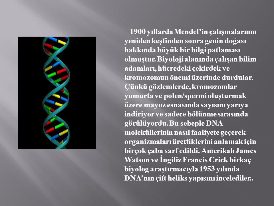 1900 yıllarda Mendel'in çalışmalarının yeniden keşfinden sonra genin doğası hakkında büyük bir bilgi patlaması olmuştur. Biyoloji alanında çalışan bil