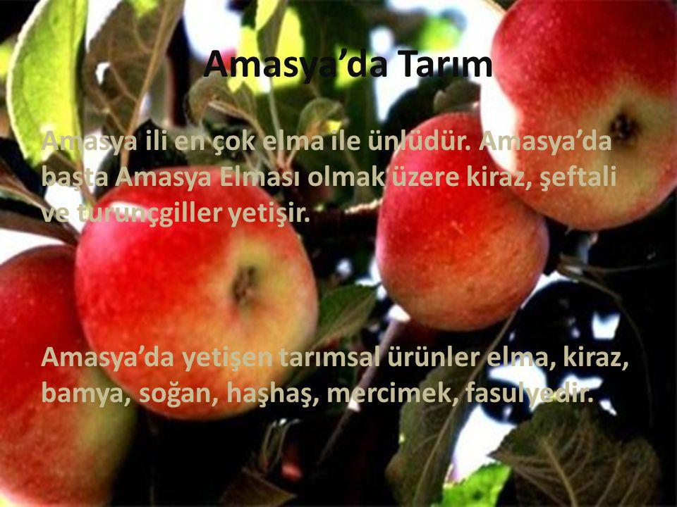 Amasya'da Tarım Amasya ili en çok elma ile ünlüdür. Amasya'da başta Amasya Elması olmak üzere kiraz, şeftali ve turunçgiller yetişir. Amasya'da yetişe