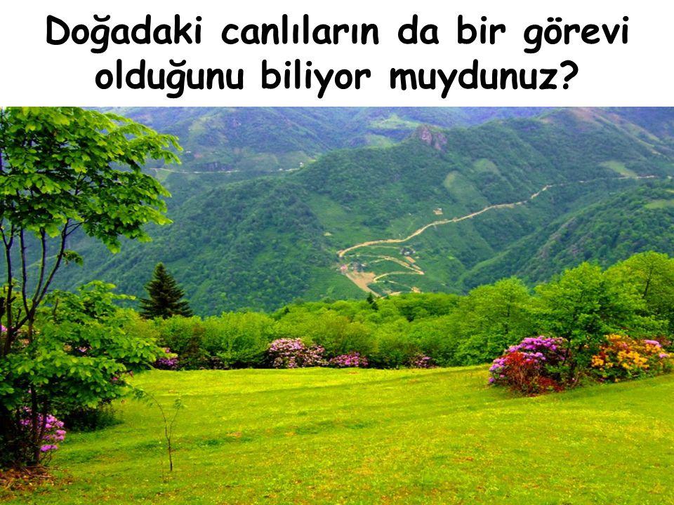 Mesela;Ağaç Havayı temizler, Bize bol oksijen Verir, Gölge yapar, Ondan eşya yaparız…